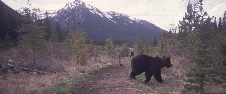 bear960x400