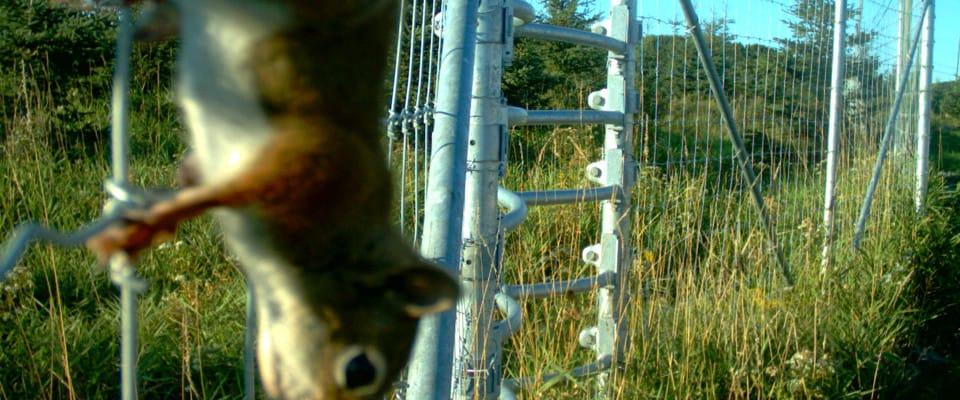 cctv_squirrel960x400