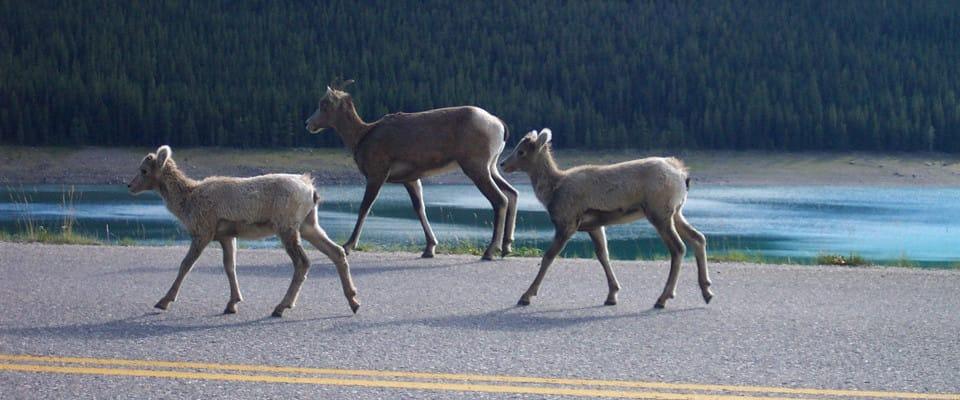 deer_road960x400
