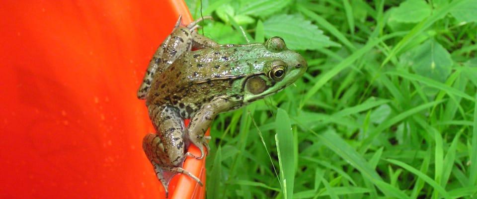 frog960x400
