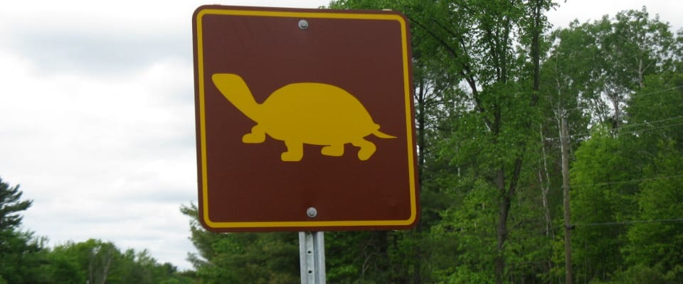 Signs_TurtleWHA_IMG_3364_960x400