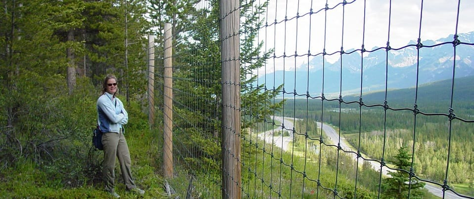 fence_banff_2.4mhigh_960x400