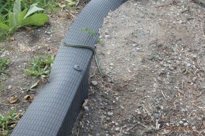 An eastern gartersnake uses the jumpout integrated with fencing
